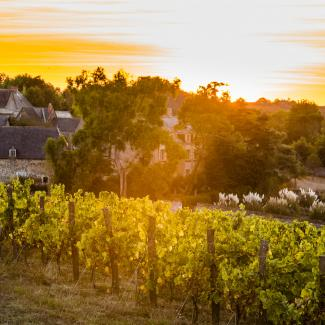 Vineyard guesthouses loire valley